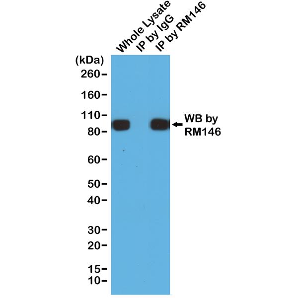 Fig 2 in CoA (RM146)