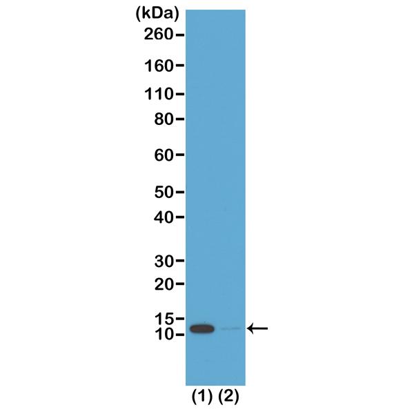 Fig 2_RM204_e