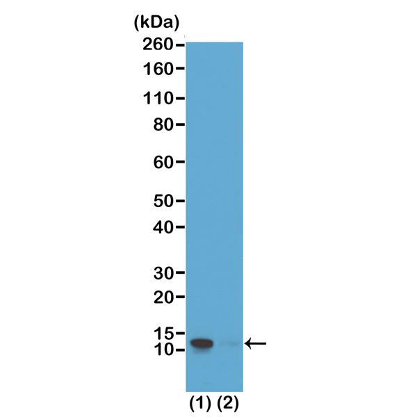 Fig 2_RM194_e