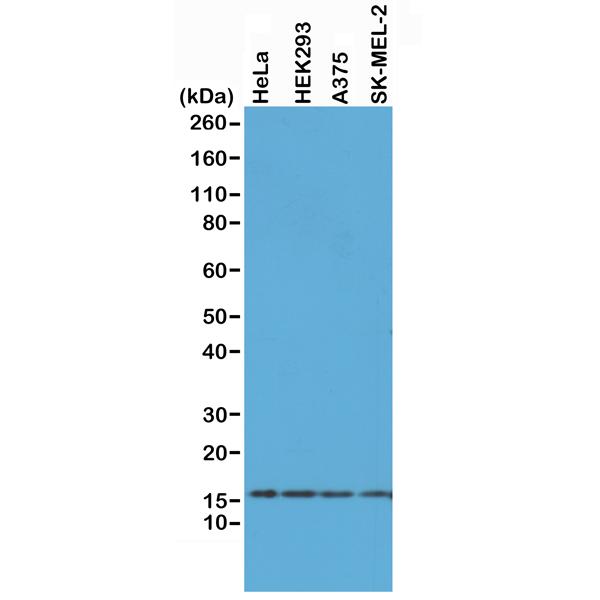 RM214_Fig1_e
